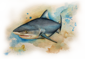 img-donor-bull-shark-3