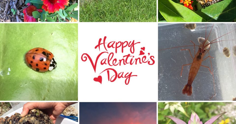Ways to be green this valentines day