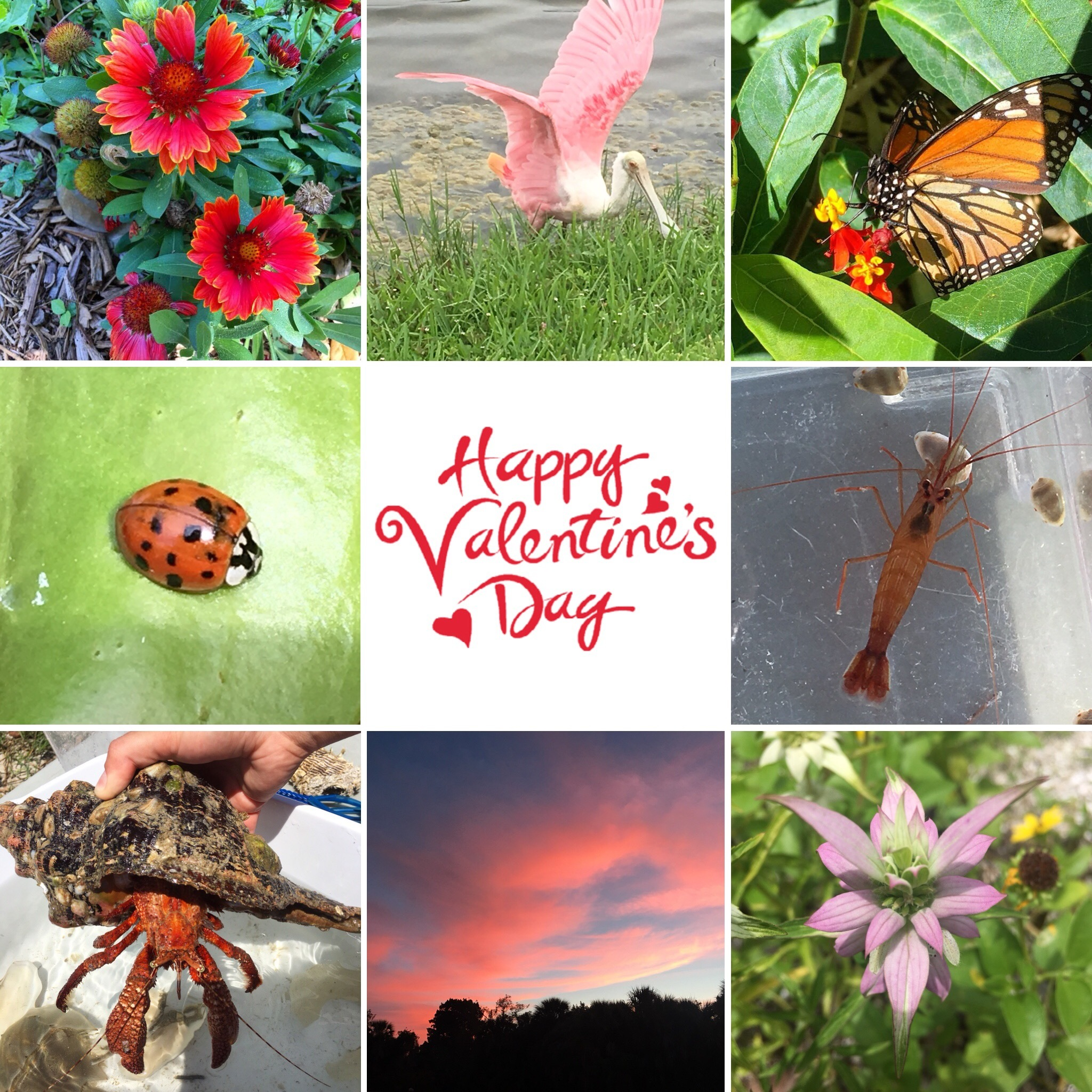 Happy Valentines Day From Nature S Academy Field Trips Florida