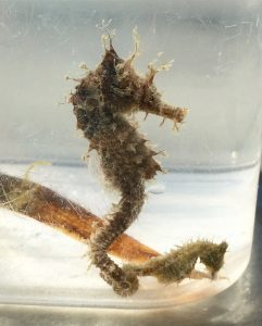Learn more about seahorses